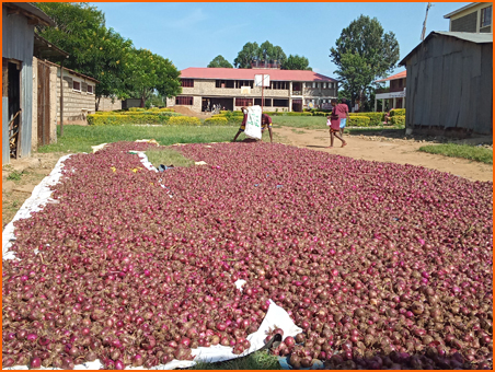 Drying onion before it is sold.