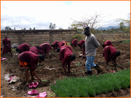 Students planting onion seedlings